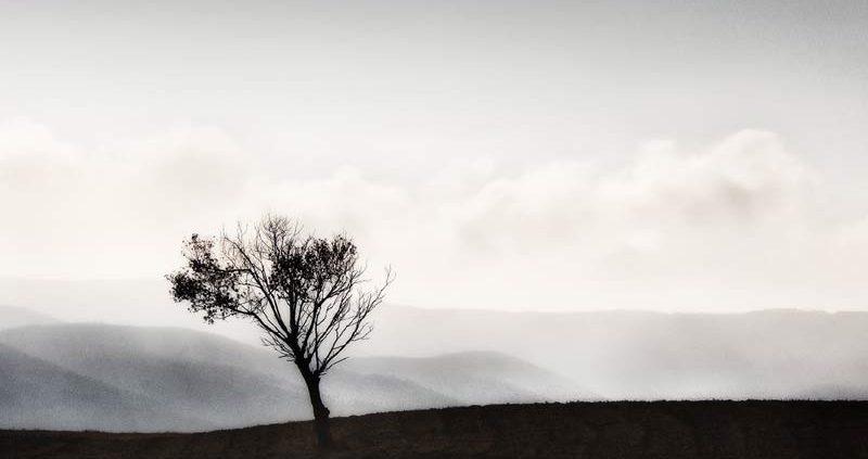 THE LONELY TREE, di Wanda D'Onofrio, fotografia digitale, 40x30 cm