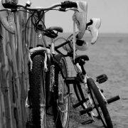 Compagni di viaggio, fotografia di Maria Teresa Ambrosi, 2012