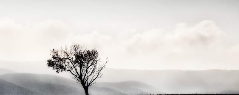 THE LONELY TREE, di Wanda D'Onofrio, fotografia digitale, 40x30 cm