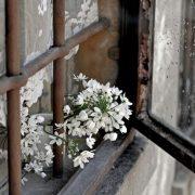 """Pioggia d'aprile, scatto di Elisabetta """"a-lis-e"""""""