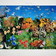 Birds of Paradise, 2009, di Peter Hutchinson